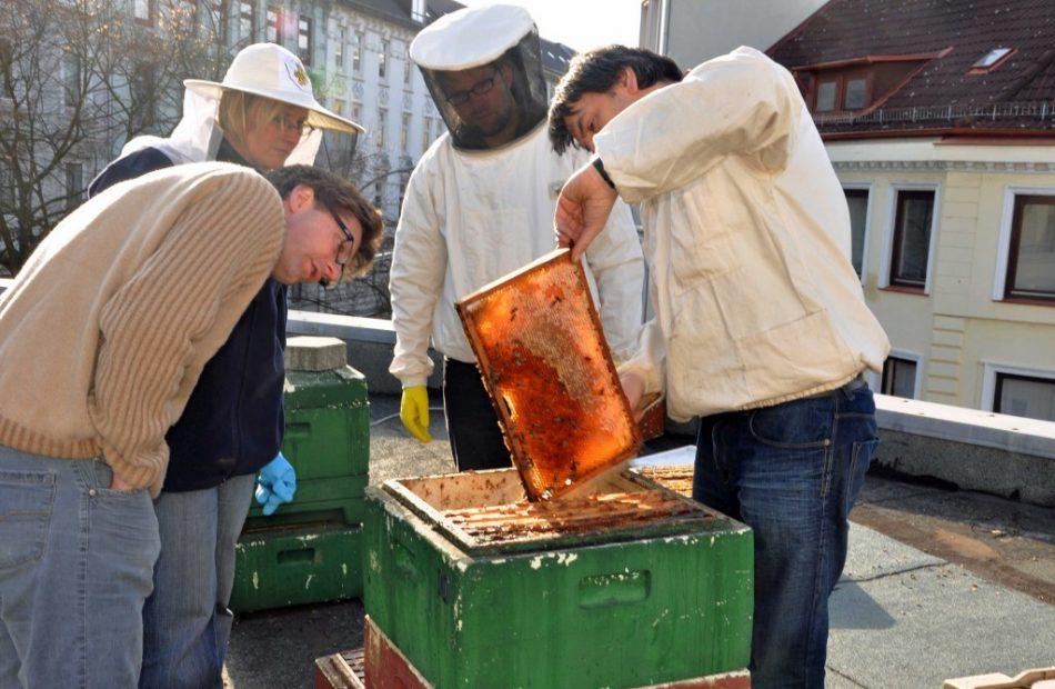 MOTTE - Werkstätten - MOTTE-Bienen & Imkerei