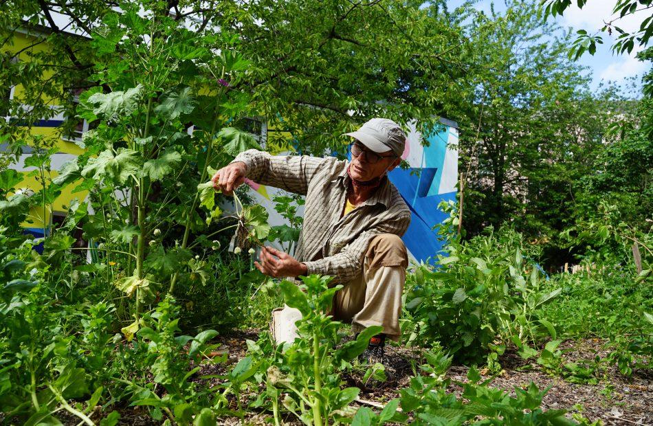 Mann kniet neben Pflanzen im Garten